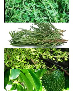 Jamaican Bush Box incl. Dried Rosemary, Dried Soursop Leaf, etc