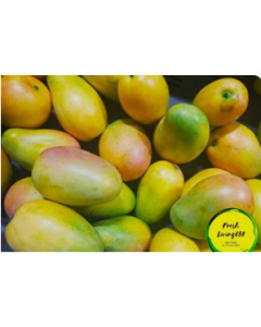Mango- East Indian, (Single - one (1))